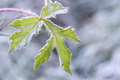 Frost on leaf closeup - PhotoDune Item for Sale