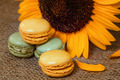 French macarons with yellow sunflowers - PhotoDune Item for Sale