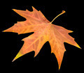 autumn leaf on a black background - PhotoDune Item for Sale