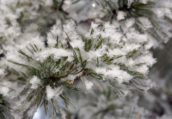 Hoarfrost - Stock Photo - Images