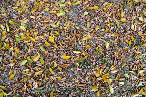 Falls Leaves Texture - Stock Photo - Images