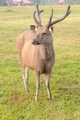 Deer standing in field near camp. - PhotoDune Item for Sale