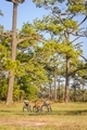 Three bicycles parked in a meadow - PhotoDune Item for Sale
