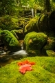 Maple leaf on moss covered rocks near wallterfall in rains fores - PhotoDune Item for Sale