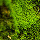 Beautiful Moss 4 - VideoHive Item for Sale