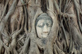 Buddha Head Statue in Banyan Tree, Thailand - PhotoDune Item for Sale