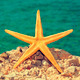 starfish on the beach - PhotoDune Item for Sale