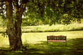 Park bench under tree - PhotoDune Item for Sale