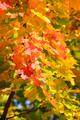 Colorfull autumn leaves - PhotoDune Item for Sale