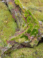 Old decaying lichens moss covered taiga tree trunk - PhotoDune Item for Sale