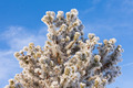 Winter pine tree detail hoar frost snow covered - PhotoDune Item for Sale