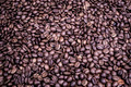 Coffe seeds - PhotoDune Item for Sale