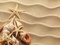 Sea shell on sand - PhotoDune Item for Sale