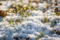 Fleurs de glace - PhotoDune Item for Sale