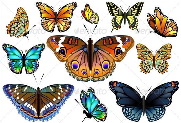 GraphicRiver Set of Colorful Realistic Isolated Butterflies 6452379