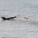 Branch In The Sea  - VideoHive Item for Sale