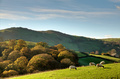 Sheep in autumnul English rural scene - PhotoDune Item for Sale