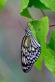 White butterfly on leaf - PhotoDune Item for Sale