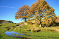 Two trees in an autumn landscape  - PhotoDune Item for Sale