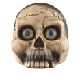 skull - PhotoDune Item for Sale