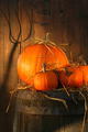 Pumpkins on wine barrel - PhotoDune Item for Sale