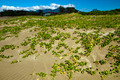 plants grow on sands - PhotoDune Item for Sale
