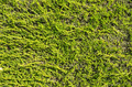 Flat Hedge Background - PhotoDune Item for Sale