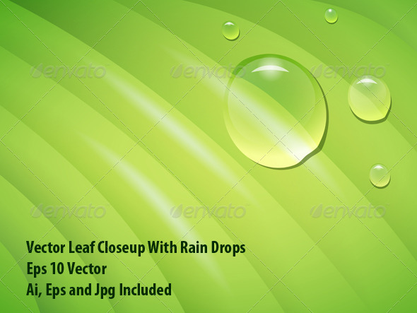 GraphicRiver Wet Leaf 6547600