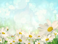 Spring Background with daisies - PhotoDune Item for Sale