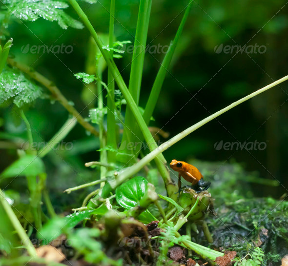 frogger - Stock Photo - Images