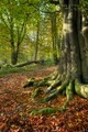 European beech wood - PhotoDune Item for Sale