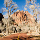Ghostly Ominius Trees Devoid of Leaves Road to Zion - PhotoDune Item for Sale