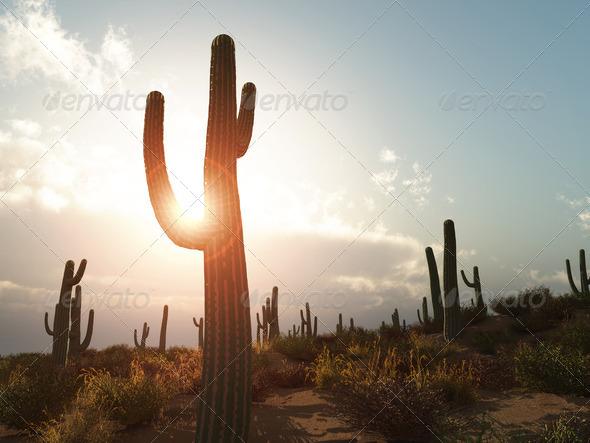 PhotoDune Arizona 689745