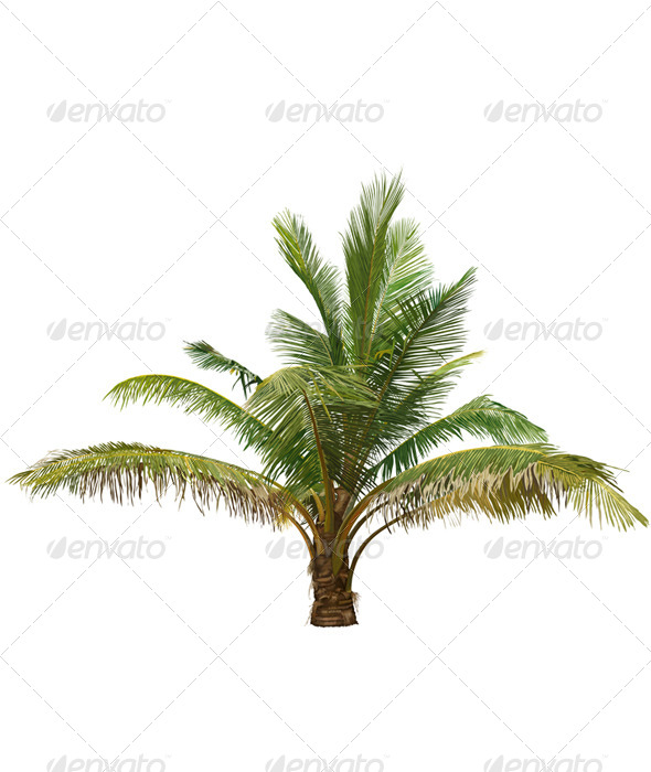 GraphicRiver Palm Tree 6594530