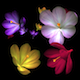 Rain of Flowers - Multicolored Crocus  - VideoHive Item for Sale