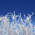 frost winter branches under blue sky - PhotoDune Item for Sale