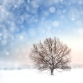 winter bare tree and snowfall - PhotoDune Item for Sale