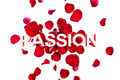 Text Passion with Rose Petals on White - PhotoDune Item for Sale