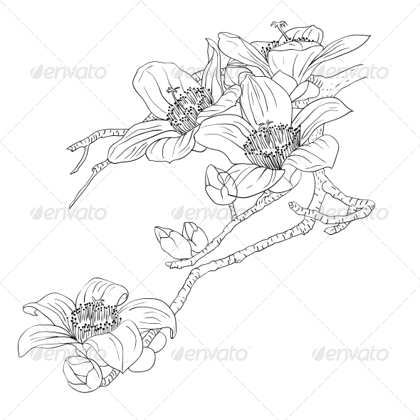 GraphicRiver Orchids 6651064