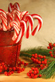 Candy canes with berries and pine - PhotoDune Item for Sale