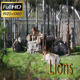 Lions - VideoHive Item for Sale