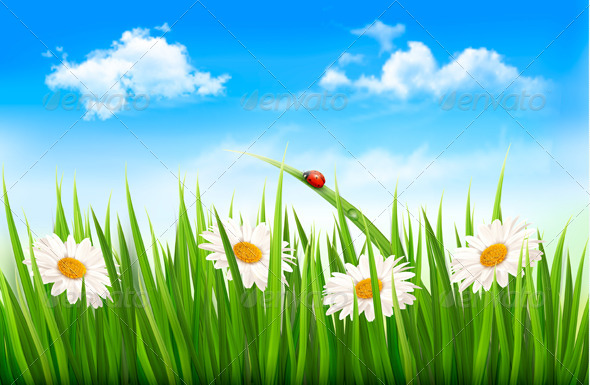 GraphicRiver Nature Background with Green Grass Flowers 6674433