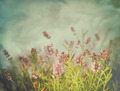 Lavender flowers with vintage color filters - PhotoDune Item for Sale