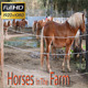 Horse Farm - VideoHive Item for Sale