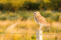 Owl on a Fence - PhotoDune Item for Sale