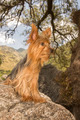 Yorkshire Terrier Dog on a Stone - PhotoDune Item for Sale