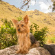 Yorkshire Terrier Dog on a Stone 02 - PhotoDune Item for Sale