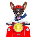 crazy silly motorbike dog - PhotoDune Item for Sale