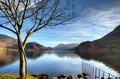 Tree on the shore of Ennerdale Water - PhotoDune Item for Sale
