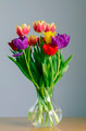 Tulips - PhotoDune Item for Sale